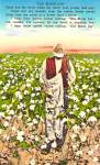Old Black Joe In A Southern Cotton Field Postcard