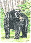 Black Bear By J.kohr 1990 Handcolored/signed Blank Notecard