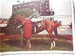 Vintage Secretariat-kentucky Derby Placemat
