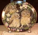 Little Owls By Dick Twinney,baby Owls Collection