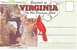 Sovenir Of Virginia The Old Dominion State
