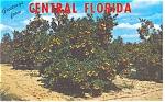 Central Florida Souvenir Folder