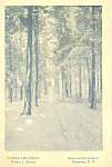 Under The Pines Walter L.palmer Postcard