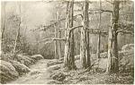 Old Forest Scene Postcard