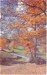 Tints Of Autumn Road Scene Postcard