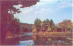 Pines And Lake Scene Postcard