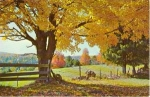New England Fall Scenic Postcard