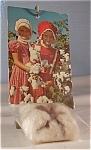 Novelty Postcard Boll Of Cotton