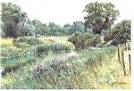 Tree Lined Brook Scenic Postcard