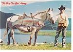 Trout On Horseback Comical Postcard
