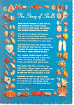 Story Of Shells Postcard
