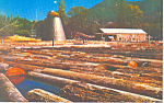 The Old Sawmill Postcard