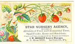 Star Nursery Agency Trade Card