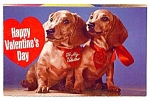 Valentine: Two Cute Dachshunds