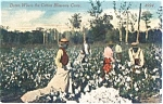 Black Americana Pickin Cotton Postcard