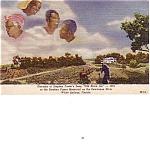 Black Americana Florida Souvenir Stephen Foster Postcard
