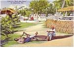 Florida Black Memorabilia Souvenir Postcard