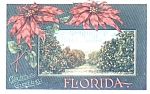 Christmas Greetings From Florida Post Card