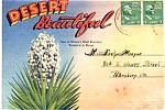 The Desert Souvenir Postcard Folder