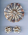 Gorgeous Real Shell Brooch And Screwback Earring Set