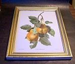 Carlos Von Riefel Pinx Pear Print