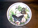 Black Butterfly Hamilton Collection