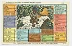 1948 Derogatory Black Americana Postcard