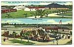 1954 Fla Barnum/bailey Circus Postcard