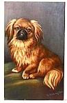 Vintage Pekingese Dog Postcard Nice