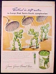 Green Giant Sweet Peas With Jolly Green Giant Ad - 1945