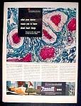 Rexall Drug Company Ad - 1948