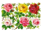 Victorian Die-cut Pink ,red, Yellow, Roses Set Pzb