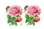 Victorian Die-cut Large Rose's Made In Germany