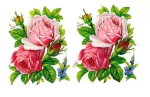 Vintage Die-cut Scrap Pzb Pink Roses German Made