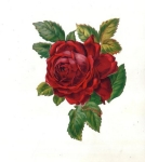 Victorian Die-cut Scrap Large Red Rose
