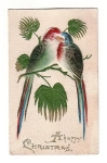 Birds Hand Tinted Felt Beautiful Parrots