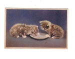 Two Little Kittens Drinking Milk? 1952