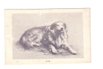 Jim The Dog Ezra Meeker Historical Postcard