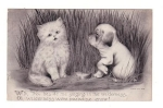 Cat And Puppy Postcards 1909 By Colby
