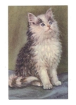 Adorable Vintage Postcard Fluffy Kitten By Abington