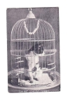 Vintage Postcard Cat In Cage Can Not Come Out Tonight