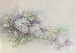 Sonie Ames - Lilac Study - Vintage 1978 - Oop