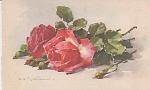 Catherine Klein - Roses - Postcard - 1910 - Study