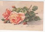 C.klein - Vintage - Roses - Post Card - Circa 1910