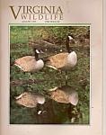 Virginia Wildflie - August 1995