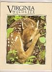 Virginia Wildlife - June 1992