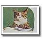 Strange Weird Cat & Rat Dinner Plate Antique Photograph Ingersoll ...