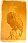 Civil War Union Bald Eagle Bird Mascot Old Abe Antique Carte Cdv ...