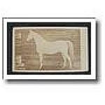 Antique Victorian Photograph Carte De Visite White Horse 1870 C
