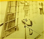 Yellow Rat Snake Victorian Stereoview